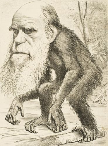 512px-Editorial_cartoon_depicting_Charles_Darwin_as_an_ape_(1871)