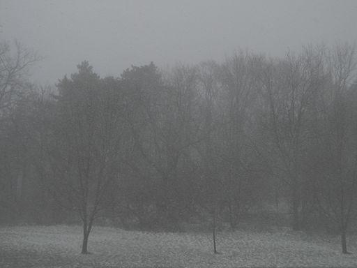 Falling_Snow_-_Guelph